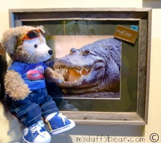 Duffy the Disney Bear says hello to the Alligator!